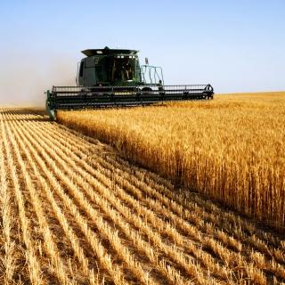 Farmer harvesting crop with combine